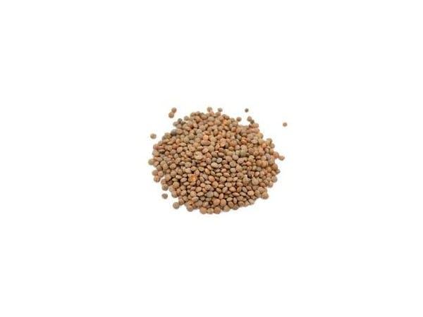 Brown Lentils - Organic